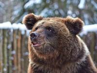 """""""Новый год в Карелии"""" (4 дн./3 н.), б/о """"Алекка"""", оз. Сямозеро   Зоокомплекс «Три медведя»"""